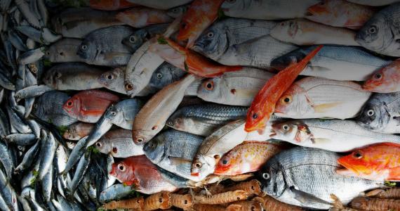 Il pesce fa festa a Cesenatico dal 30 Ottobre al 4 Novembre